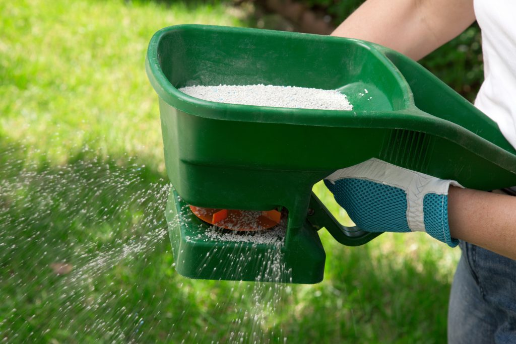 fertilizing the lawn by hand