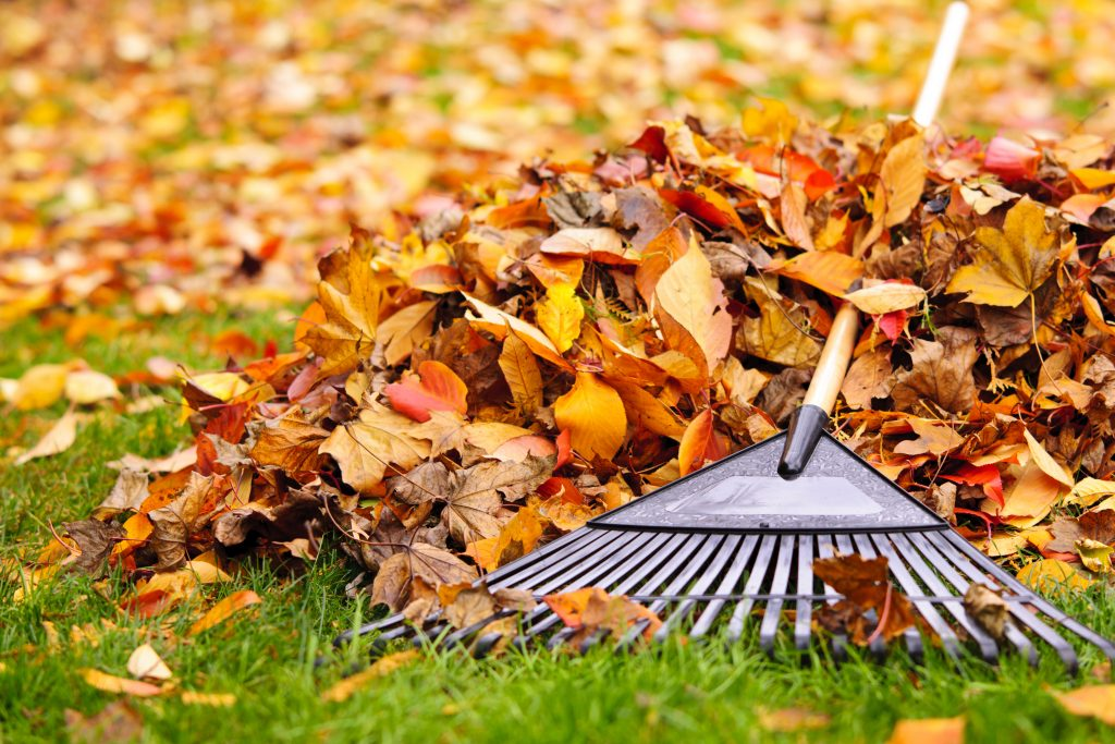 aking Leaves from lawn