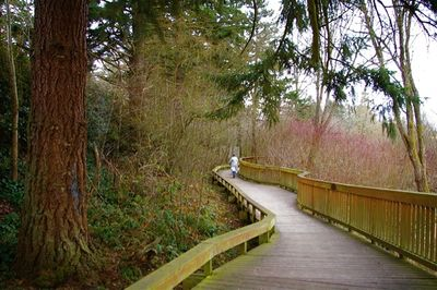 400px-Boardwalk,_Willow_Creek_Nature_Park