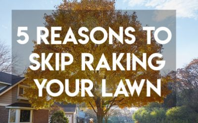 Leave the Leaves! 5 Reasons to Skip Raking your Leaves