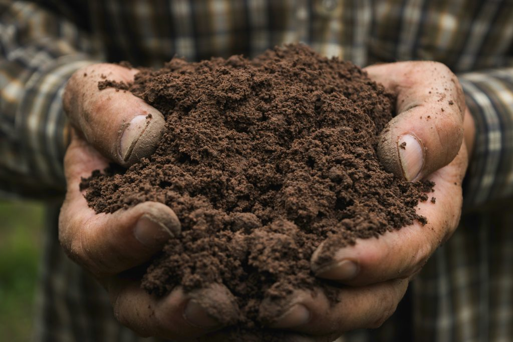 Healthy Soil in fall