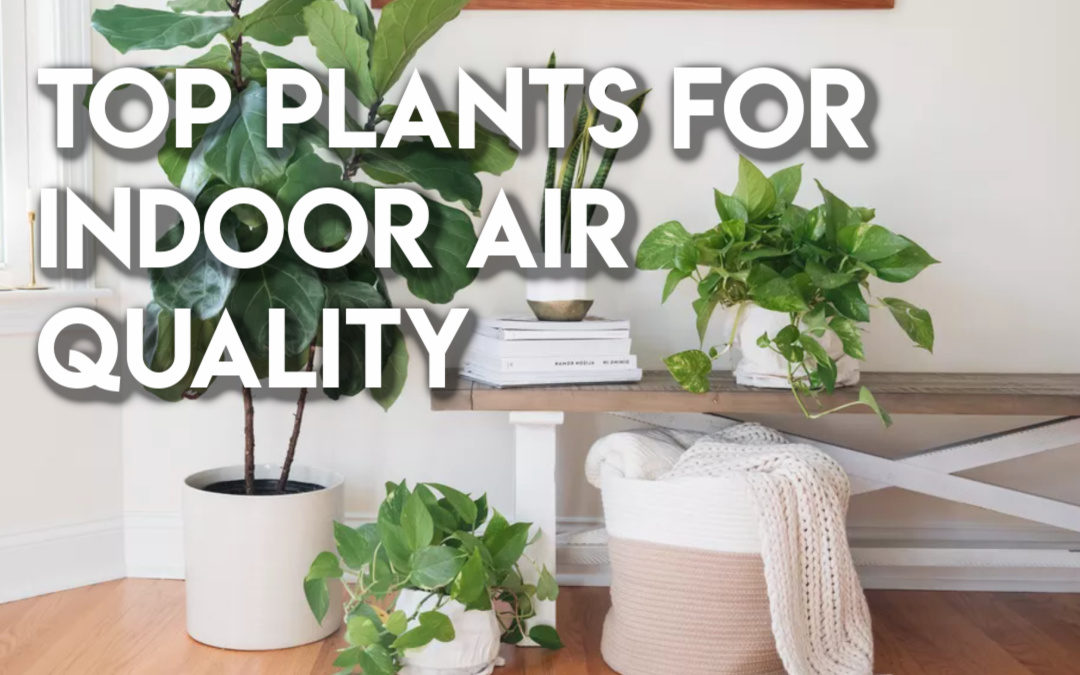 Top Plants for Indoor Air Quality
