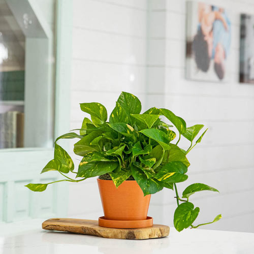 photo of plant in room