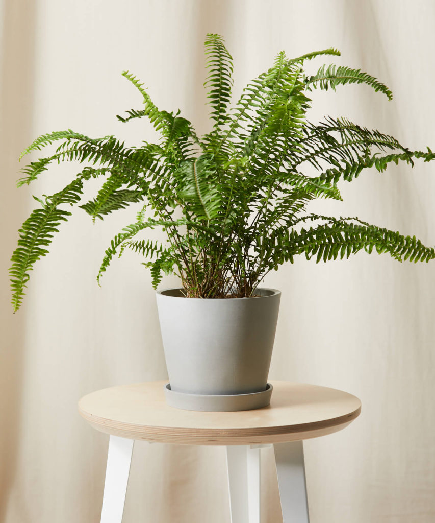 photo of fern