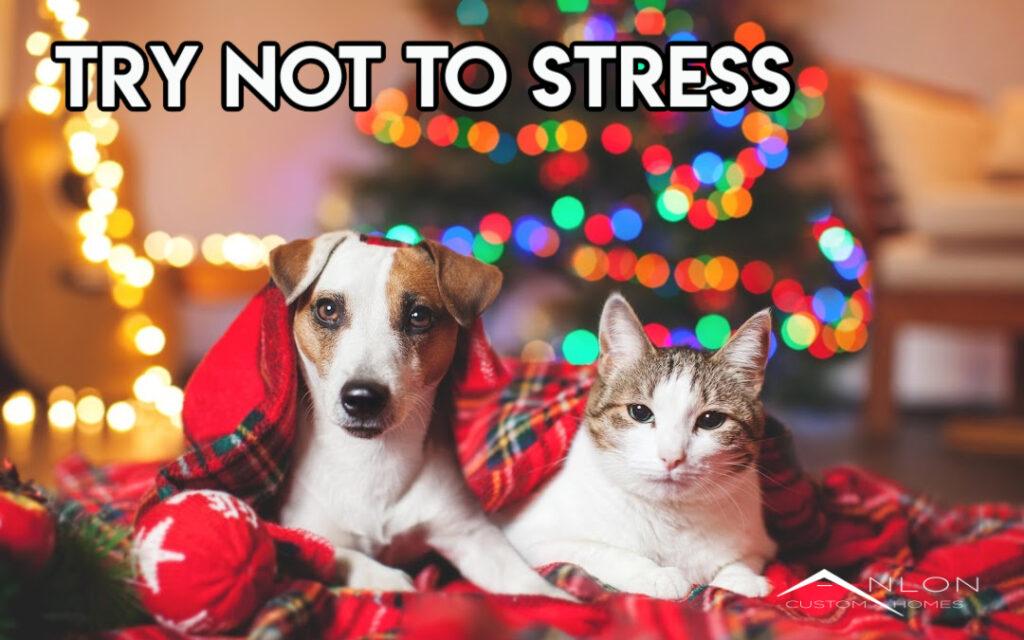 dog and cat sitting under christmast tree