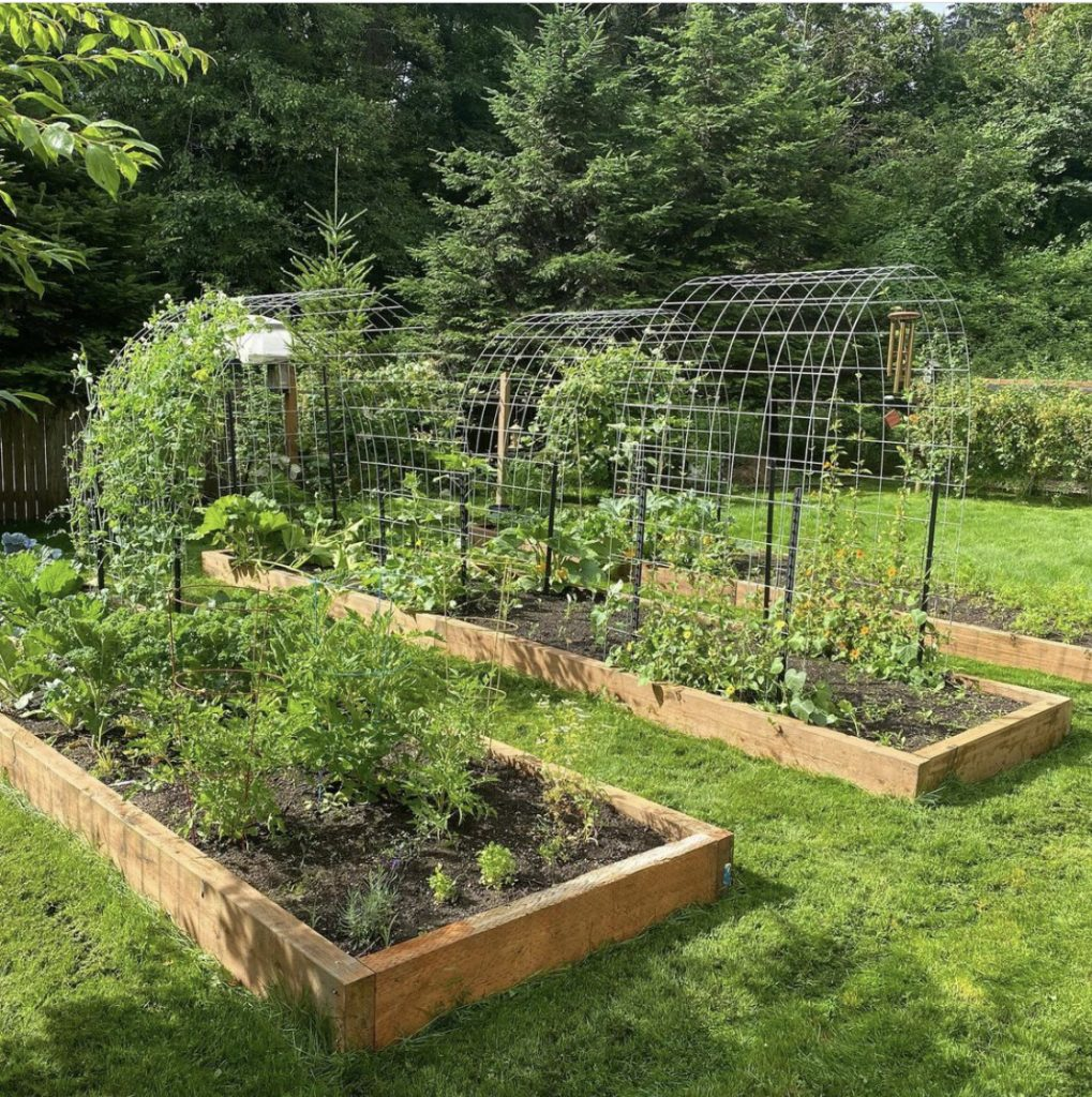 rows of raised beds with healthy plants and vegetables